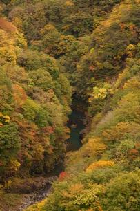 奥多摩湖周辺の紅葉風景の写真素材 [FYI00300332]