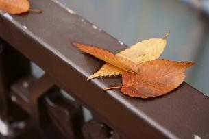 奥多摩湖周辺の紅葉風景の写真素材 [FYI00300337]