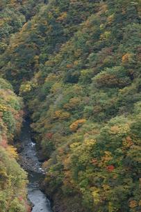 奥多摩湖周辺の紅葉風景の写真素材 [FYI00300339]