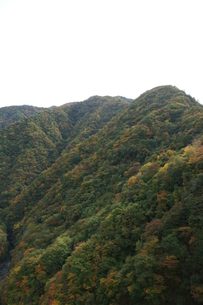 奥多摩湖周辺の紅葉風景の写真素材 [FYI00300341]