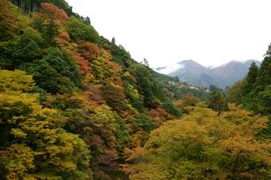 奥多摩湖周辺の紅葉風景の写真素材 [FYI00300342]