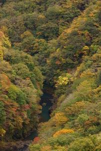 奥多摩湖周辺の紅葉風景の写真素材 [FYI00300343]