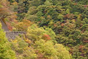 奥多摩湖周辺の紅葉風景の写真素材 [FYI00300345]