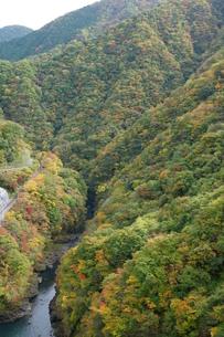 奥多摩湖周辺の紅葉風景の写真素材 [FYI00300350]