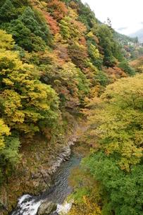 奥多摩湖周辺の紅葉風景の写真素材 [FYI00300351]