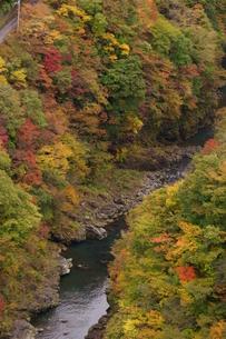 奥多摩湖周辺の紅葉風景の写真素材 [FYI00300352]