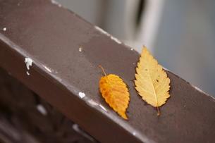 奥多摩湖周辺の紅葉風景の写真素材 [FYI00300363]