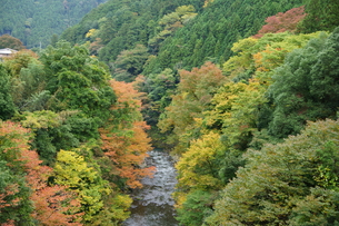 奥多摩湖周辺の紅葉風景の写真素材 [FYI00300364]
