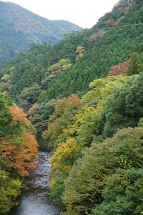 奥多摩湖周辺の紅葉風景の写真素材 [FYI00300365]