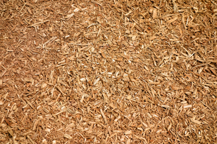 木屑の写真素材 [FYI00300877]
