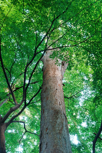 樹木の写真素材 [FYI00301094]