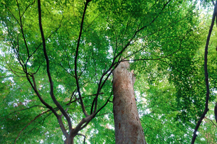 艶やかな樹木の写真素材 [FYI00301099]