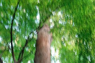 艶やかな樹木の写真素材 [FYI00301109]