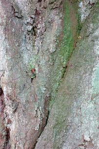 樹皮の写真素材 [FYI00301116]