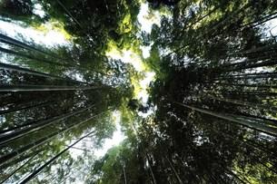 竹林の素材 [FYI00301409]