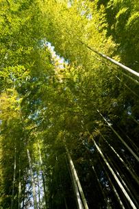 竹林の素材 [FYI00301414]