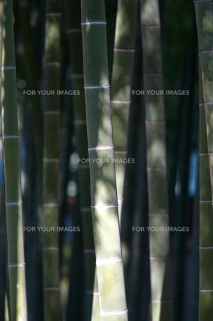 竹林の素材 [FYI00301420]