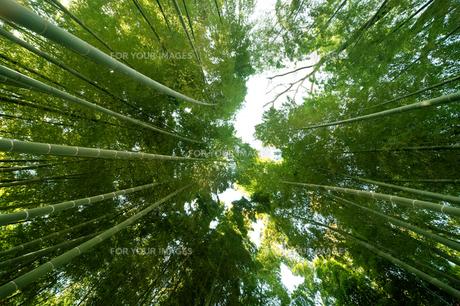 竹林の素材 [FYI00301421]