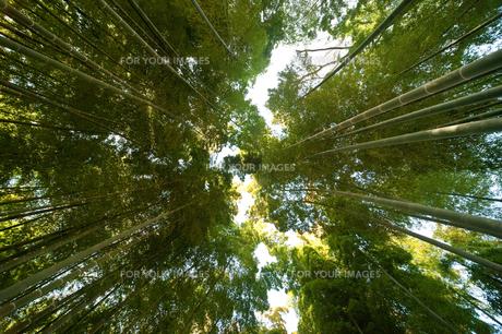 竹林の素材 [FYI00301439]