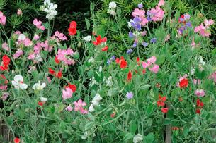 野花の写真素材 [FYI00301499]