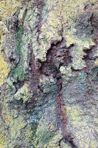 樹皮の写真素材 [FYI00301587]