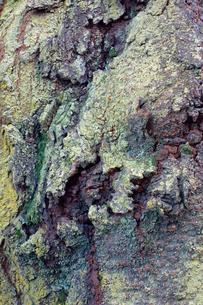 樹皮の写真素材 [FYI00301592]