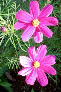 花弁の写真素材 [FYI00301762]