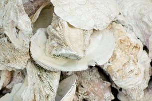食用の貝殻の写真素材 [FYI00301956]