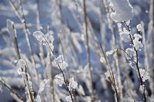 雪光るの写真素材 [FYI00302165]
