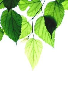 緑の素材 [FYI00302709]