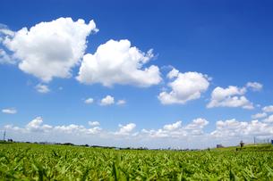 雲の連の写真素材 [FYI00302919]