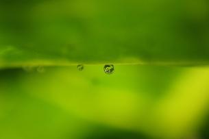 水玉わ〜るど さかさまの写真素材 [FYI00302921]
