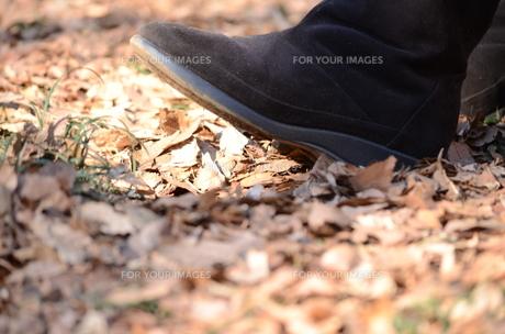 枯れ葉を踏む女性のブーツの写真素材 [FYI00302936]