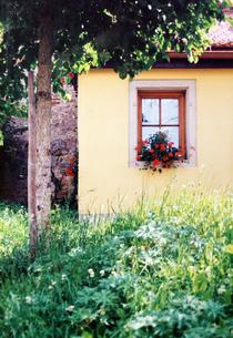 窓辺の花の写真素材 [FYI00303279]