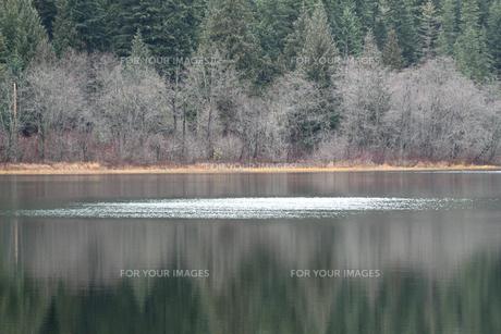 静寂のニタ湖の写真素材 [FYI00303316]