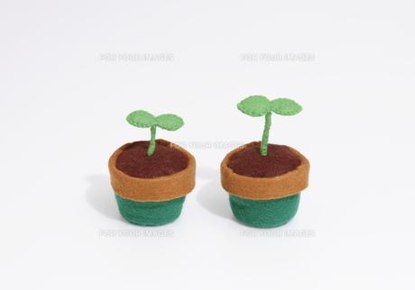 フェルトの植木鉢と双葉の写真素材 [FYI00303613]