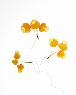 サンダーソニアのアレンジフラワーの写真素材 [FYI00303621]
