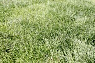 新緑の草地の素材 [FYI00303871]