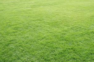 新緑の芝生の素材 [FYI00303895]