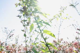 つる草が絡む夏の風景の写真素材 [FYI00303978]