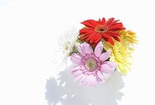 花瓶にいけたガーベラの花の写真素材 [FYI00303983]