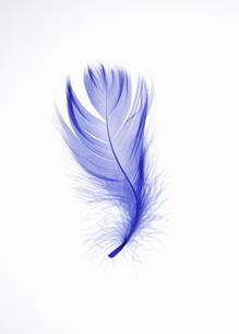 青い羽根の素材 [FYI00304003]
