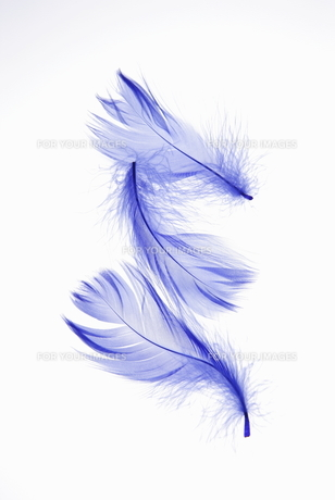 青い羽根の素材 [FYI00304016]