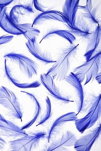 青い羽根の素材 [FYI00304020]