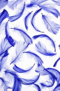 青い羽根の素材 [FYI00304029]