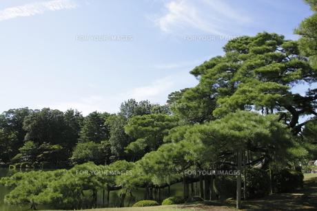 兼六園の松の木の写真素材 [FYI00304104]