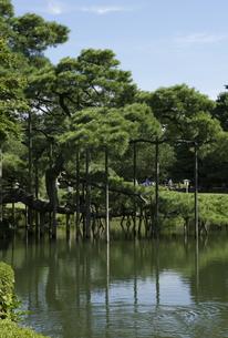 兼六園の松の風景の写真素材 [FYI00304118]