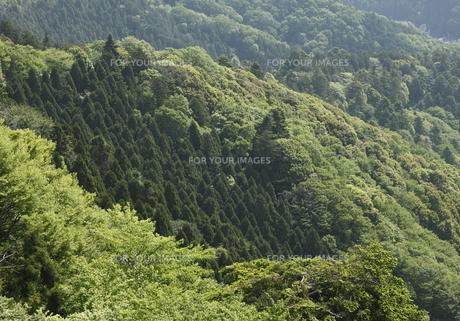 新緑の山並みの写真素材 [FYI00304350]