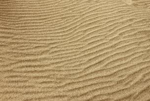 砂丘の風紋の素材 [FYI00304470]