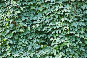 緑の生け垣の写真素材 [FYI00304480]